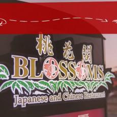Blossoms 13