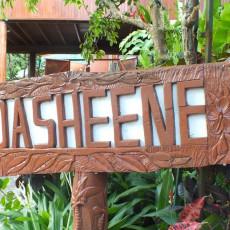 Dasheene 9