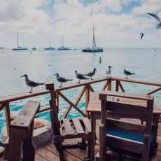 Pelican Nest 9